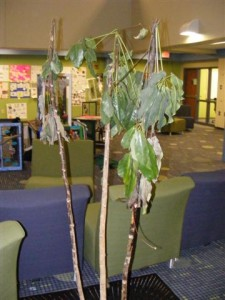 Tree in the front commons.