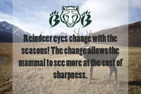Changing Eye Hue of Caribou
