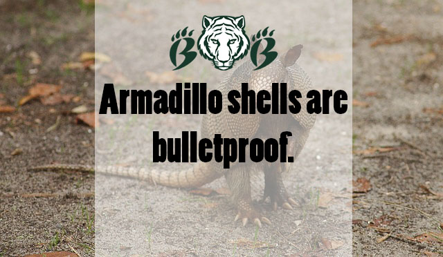 Photo+courtesy+of+Pixabay%2C+photo+credits+to+skeeze.+Source%3A+https%3A%2F%2Fwww.cnn.com%2F2017%2F08%2F04%2Fus%2Farmadillo-bullet-story-twitter-trnd%2Findex.html