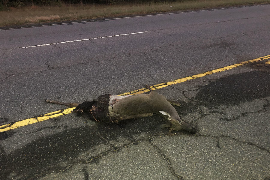 A deceased deer lays in the median off Highway 25 (Photo Courtesy of Mattie McConnell)
