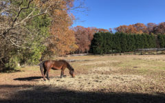Who–Or What–Is Attacking Local Horses?